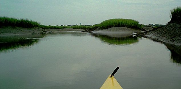 Beaufort Kayak Tours