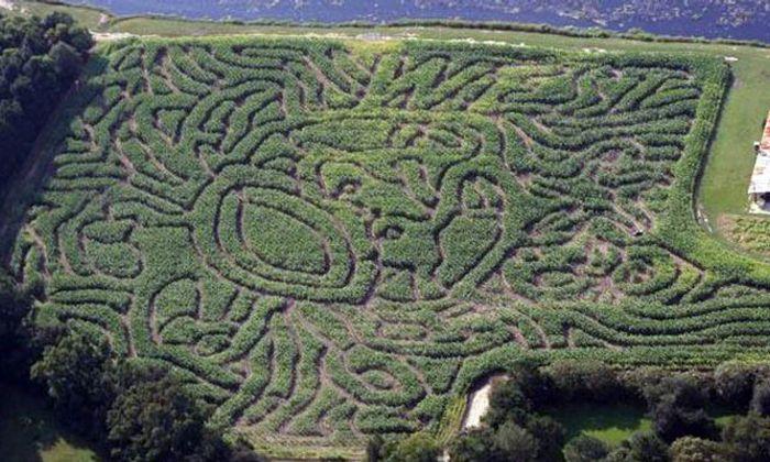 West Farm Corn Maze