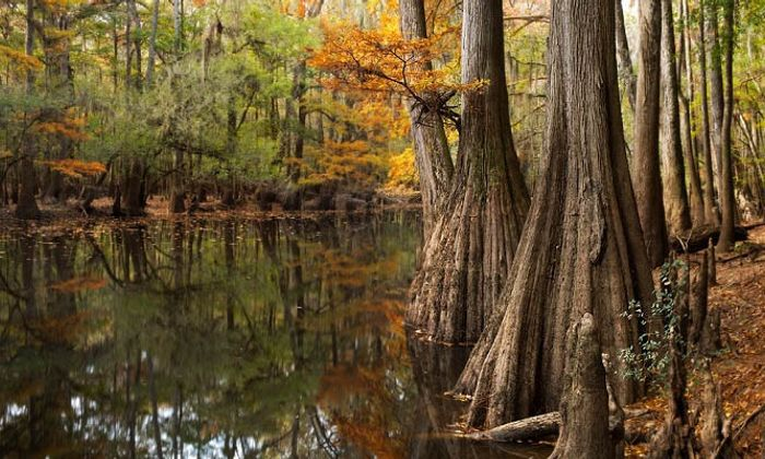 Congaree National Park