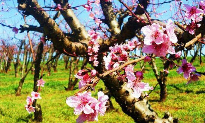Abbott Farms & Fruit Market
