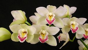 Carter And Holmes Orchids