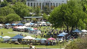 Bark To The Park: Walk and Festival for the Animals