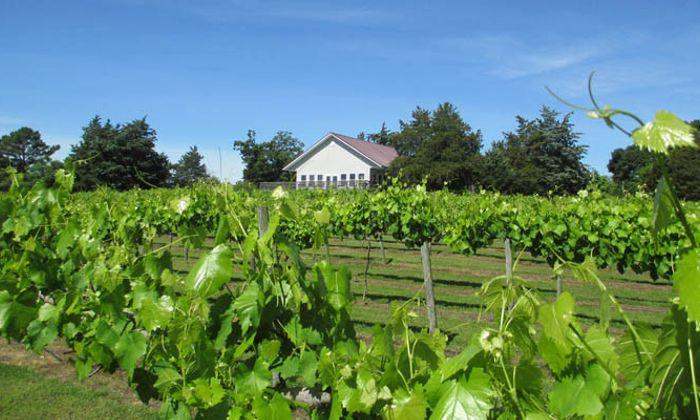 Enoree River Vineyards & Winery