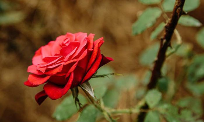Orangeburg Festival Of Roses
