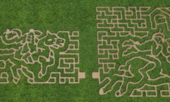 Stewart Farm Corn Maze