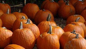 Legare Farms Pumpkin Patch