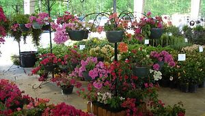 Midlands Plant And Flower Festival