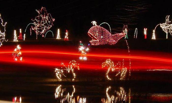 Holiday Lights Safari