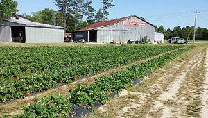 Bellamy Farms