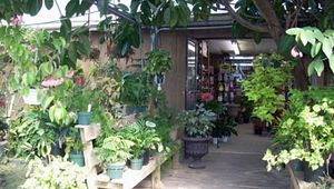 Indigo Farms Produce and Garden Center