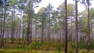 Sand Hills State Forest
